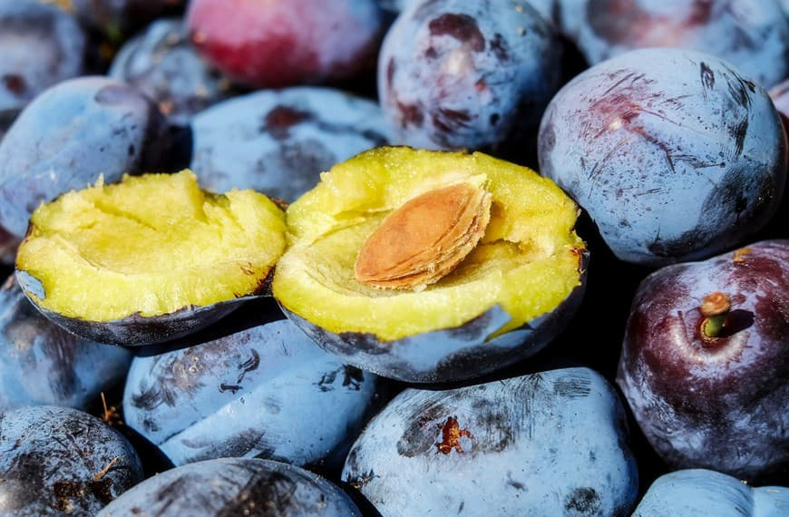 Can Dogs Eat Plums? Here's What You Need to Know About These Stone Fruits