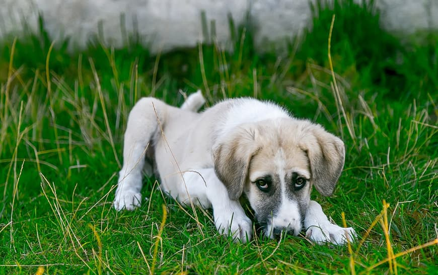 Zyrtec for Dogs Allergies: Safety, Recommended Dosage, and Precautions