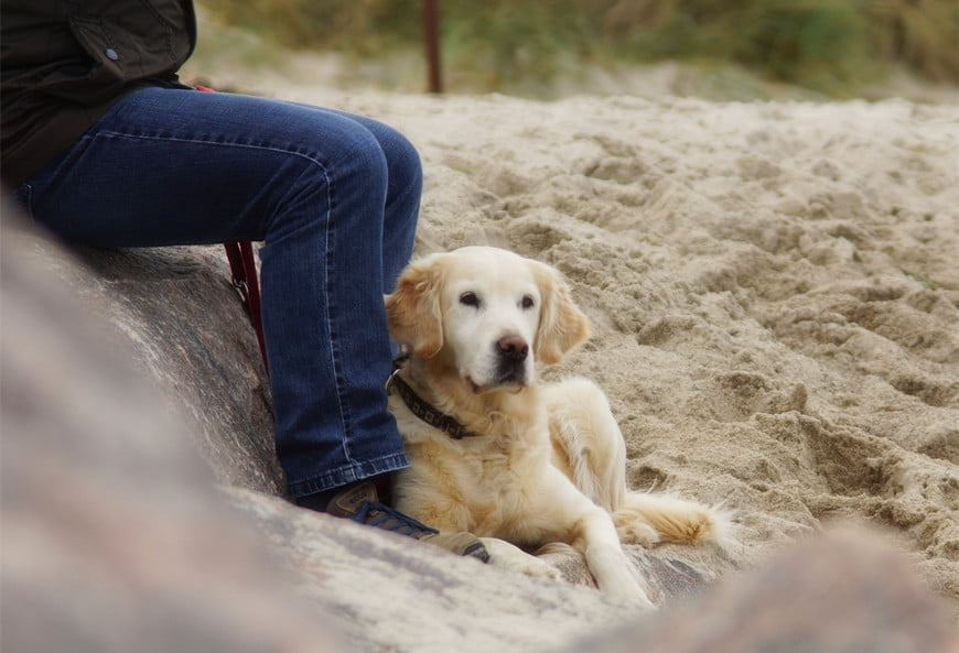 5 Reasons Why Do Dogs Lay On Your Feet