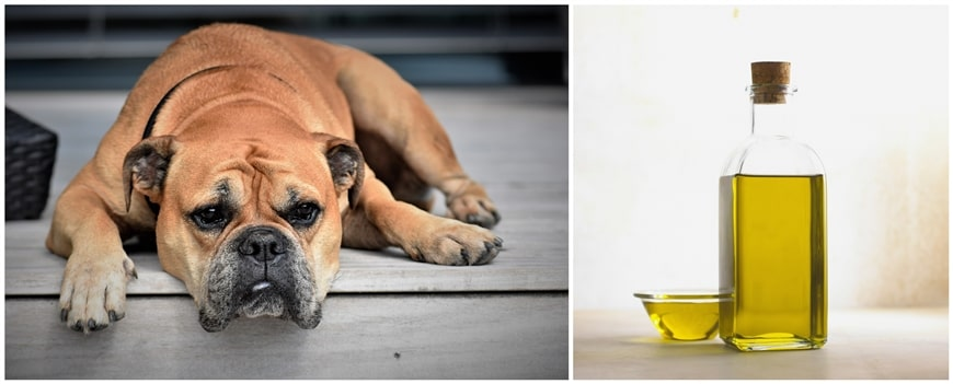 How to Properly Use Castor Oil for Dogs