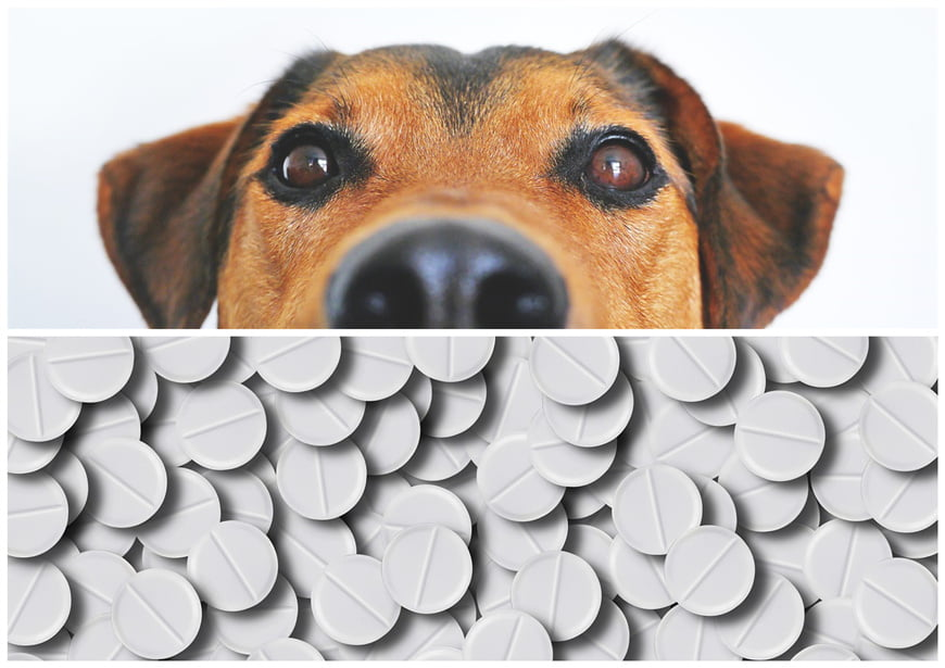 Prednisone for Dogs: What Is the Safe Amount for Itching and Autoimmune Disorders?