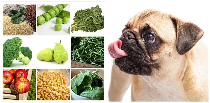 What Should You Feed Diabetic Dogs?