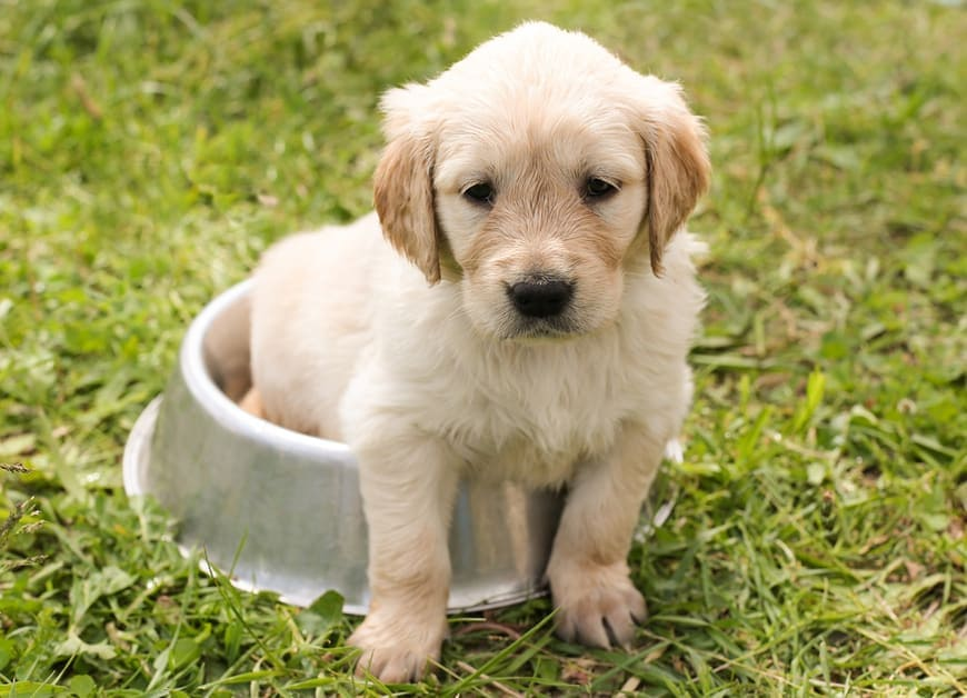 How Long Can Dog Hold Pee?