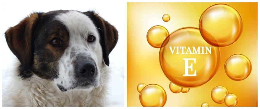 Vitamin E for Dogs: Benefits, Dosage, and Best Sources