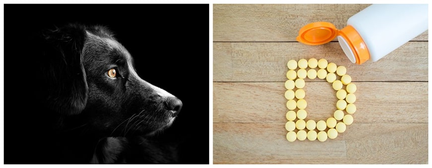 Vitamin D for Dogs: Effects, Dosage, and Natural Sources