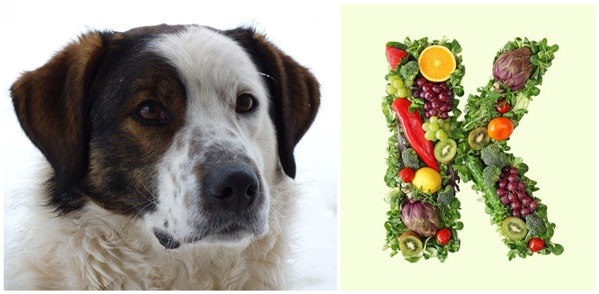 Do Dogs Need Vitamin K Supplements?